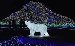Zoolights: Where Dreams Become Realities
