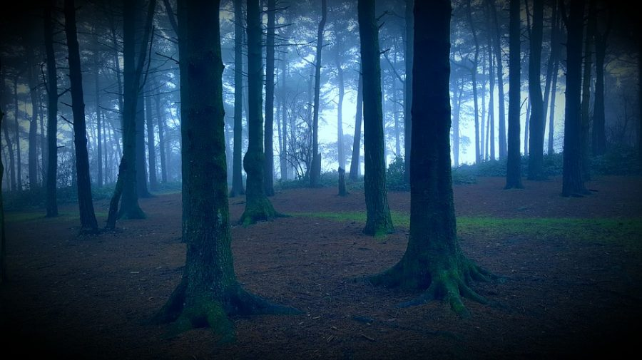 Haunted Forests in Port Orchard