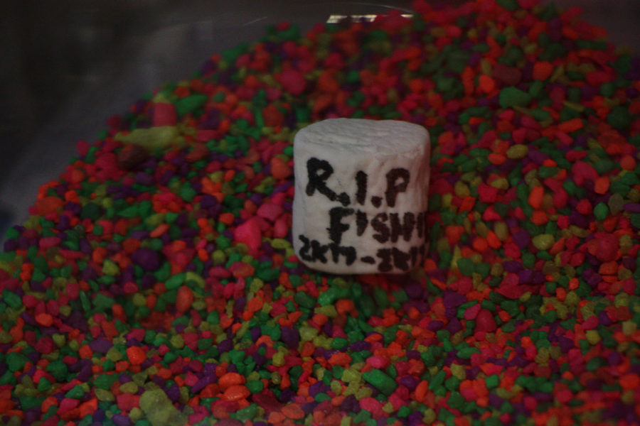Here lies the dead fish